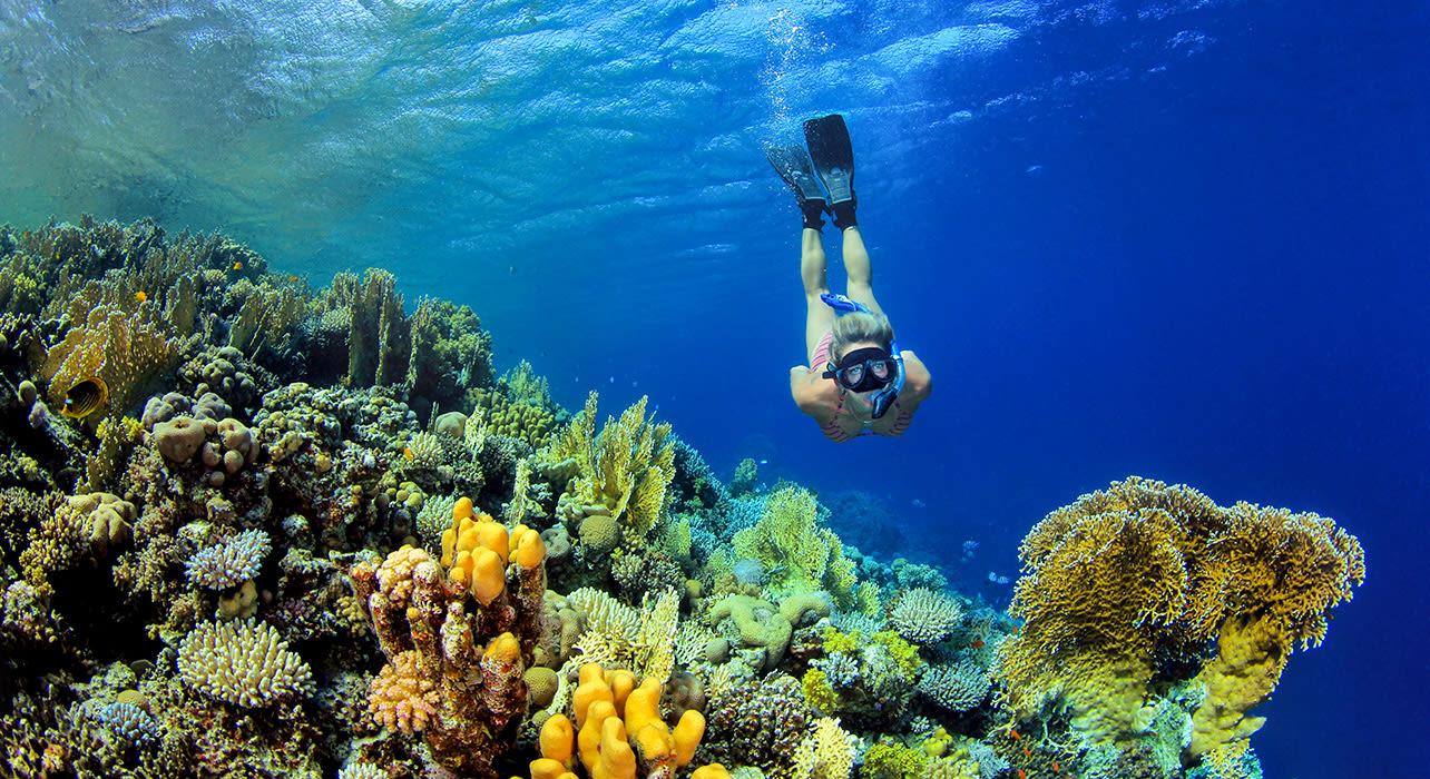 komodo snorkeling coral