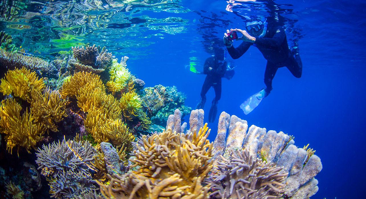 raja ampat snorkelers coral reef