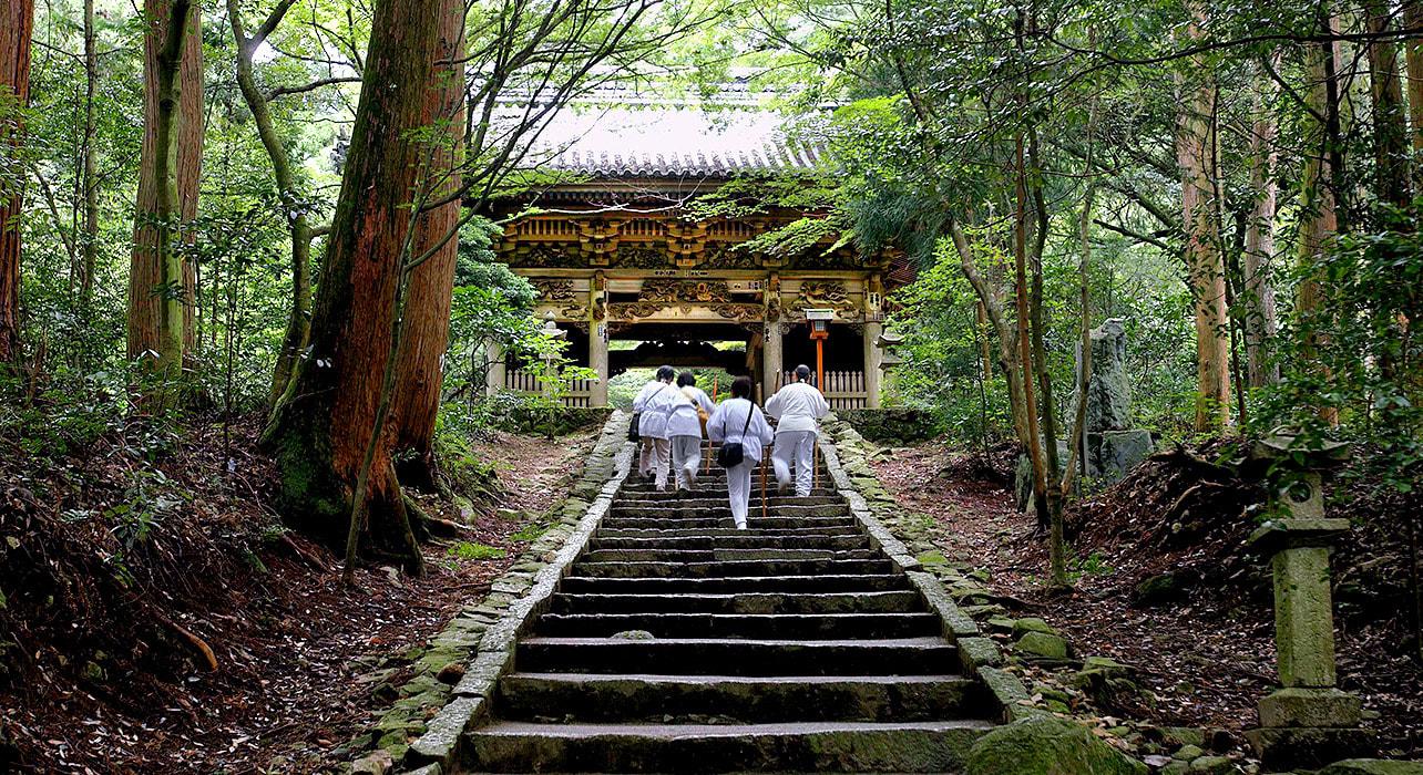 japan shikoku temple trek forest