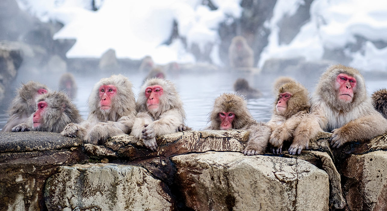 Japan: Snow Monkeys and Winter Tour | Wilderness Travel - photo#14