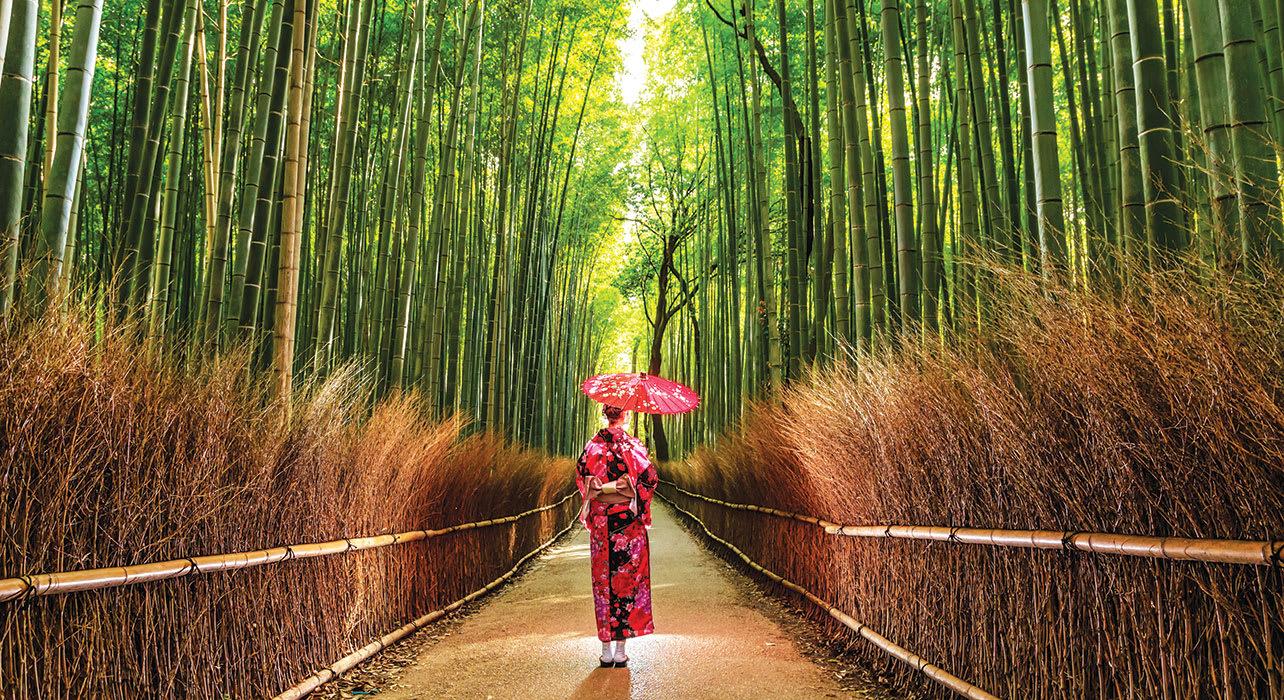 kyoto geisha kimono bamboo forest