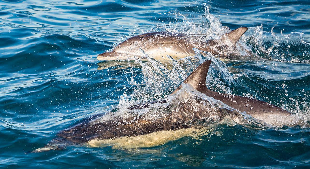 silversea new zealand dolp cradj