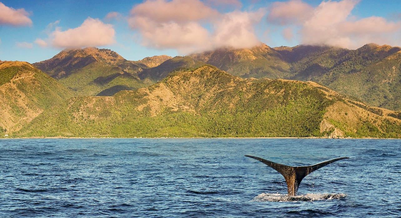 8 slide new zealand kaikoura coast sperm whale pano