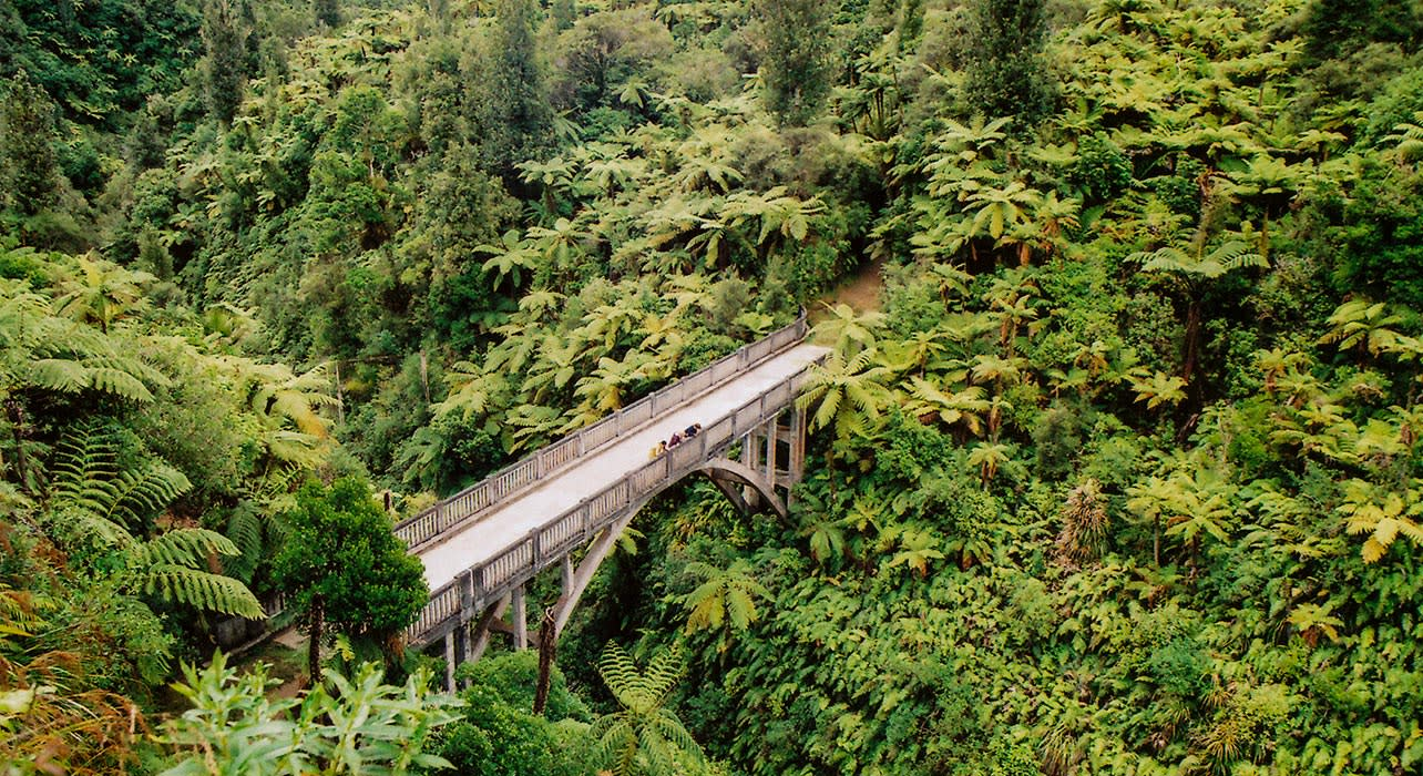 bridge to nowhere new zealand jungle