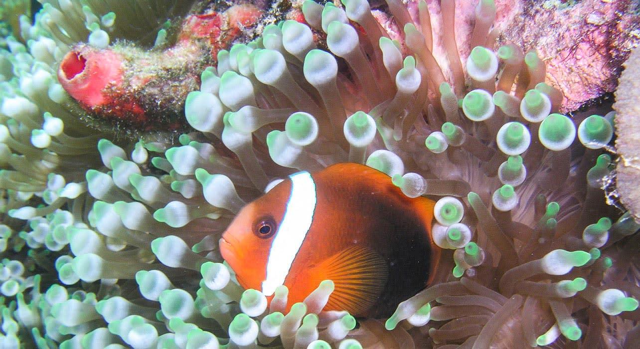palau snorkeling fish
