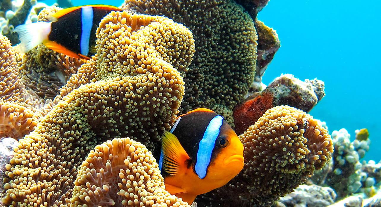 micronesia fish coral