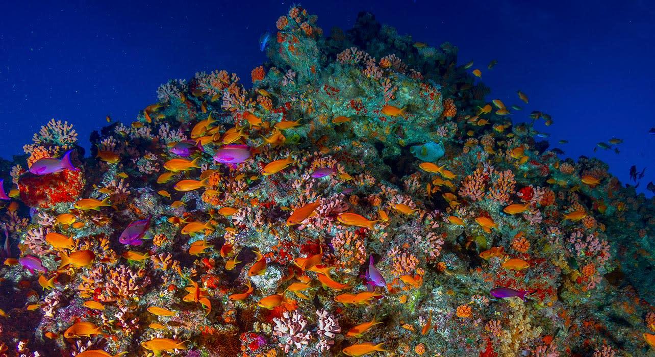 tonga reef fish coral snorkel