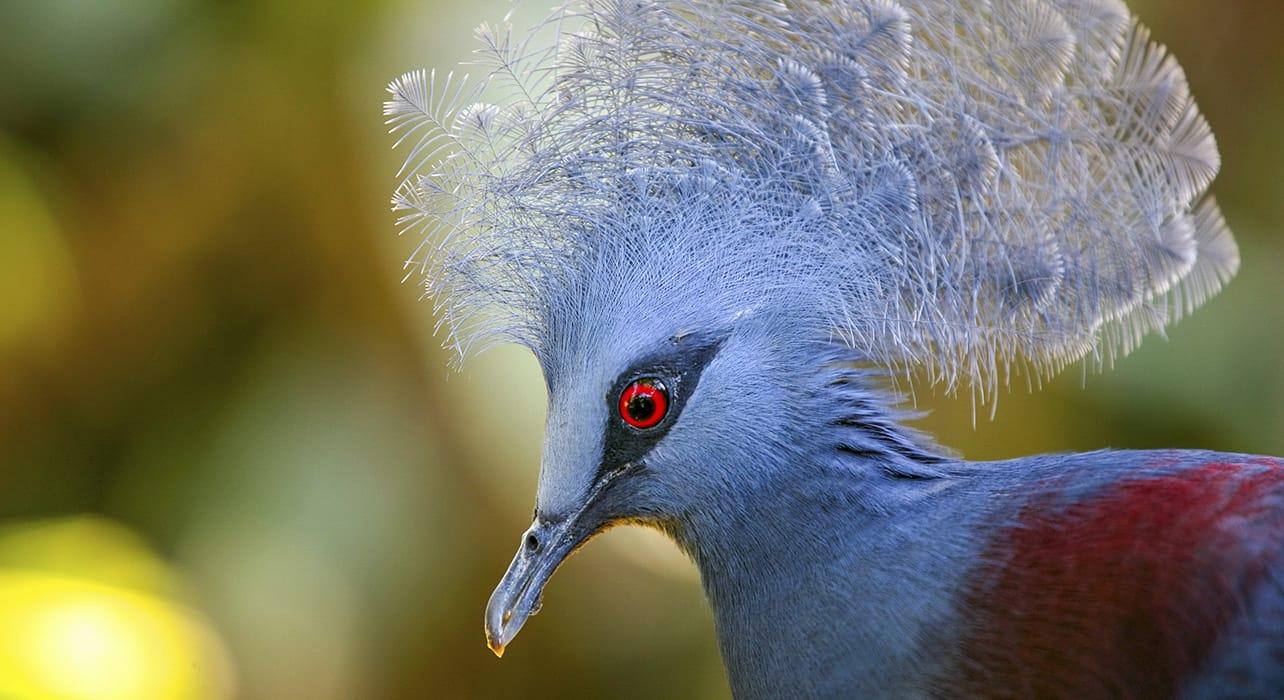 vanuatu bird wildlife