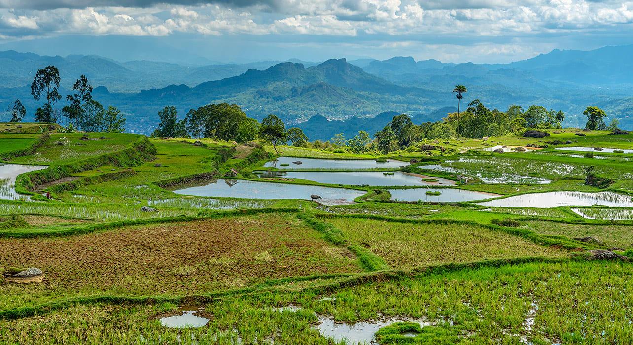 vanuatu agriculture valley