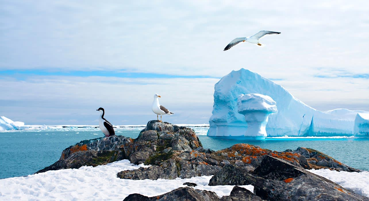 antarctica ice birds