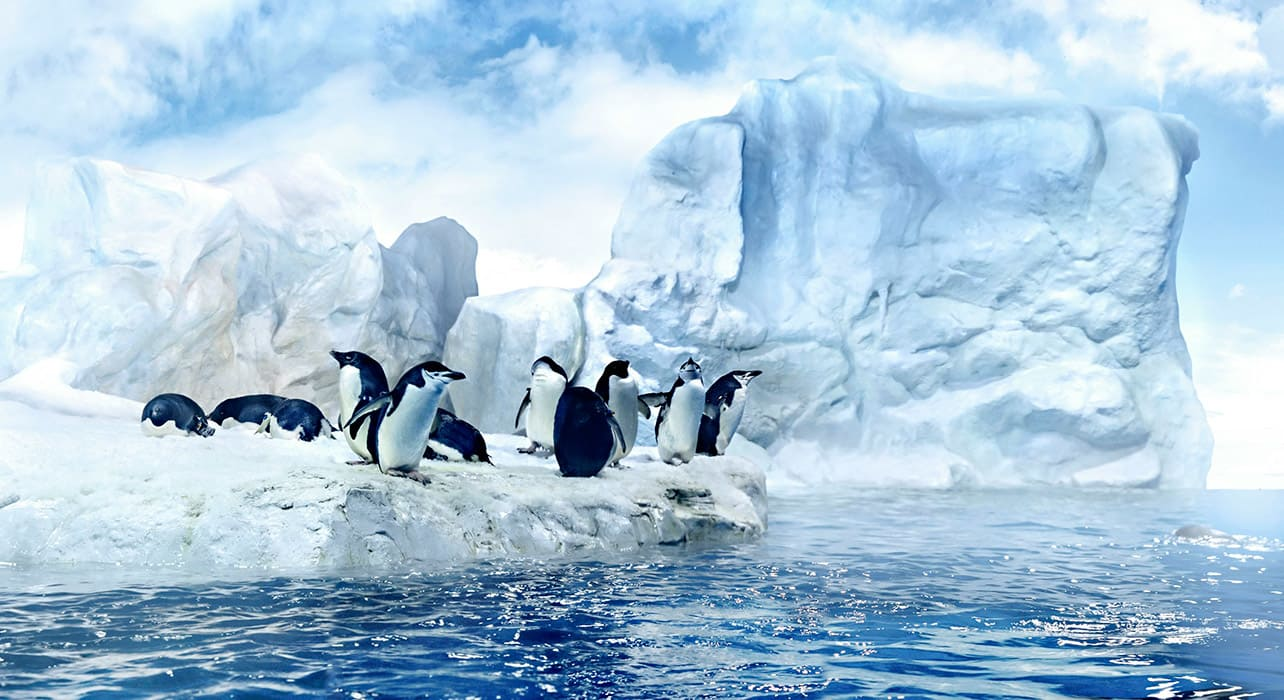 iceburg penguins
