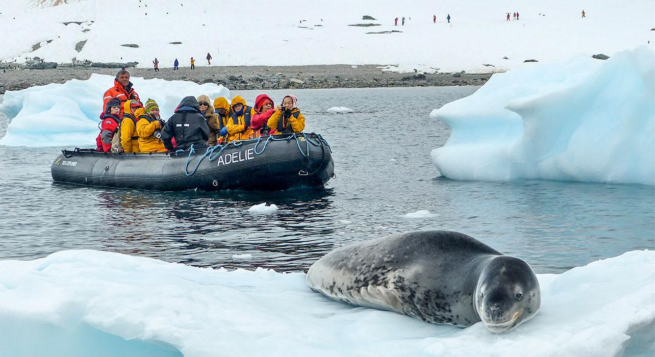 zodiac seal antarctica