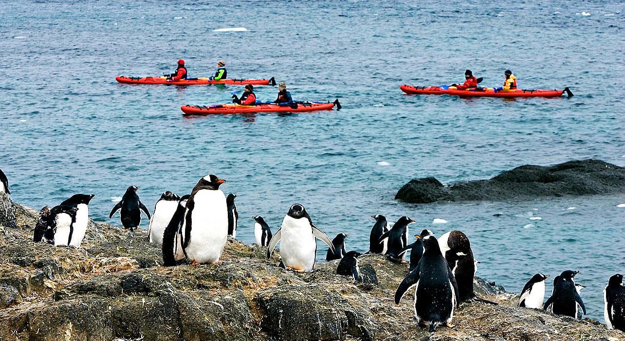 2 slide kayak penguin antarctica pano