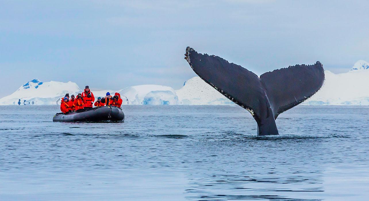4 slide antactica zodiac whale tail pano