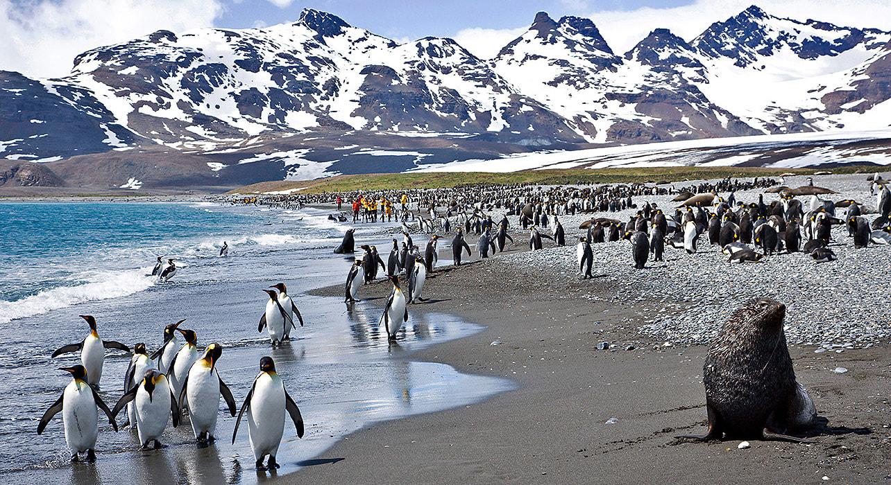 antarctica penguin hike