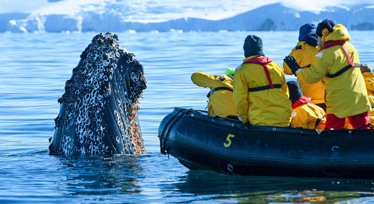 antsgeofalk travelers on zodiac whale watching