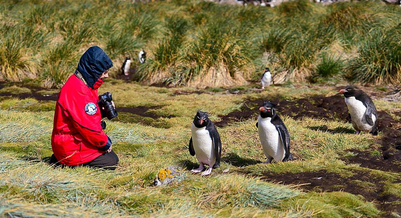 falklands south georgia antarctica rockhopper penguins