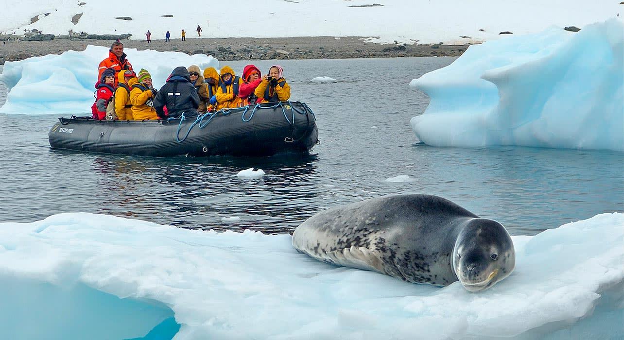 antarctica baby seal ice floe