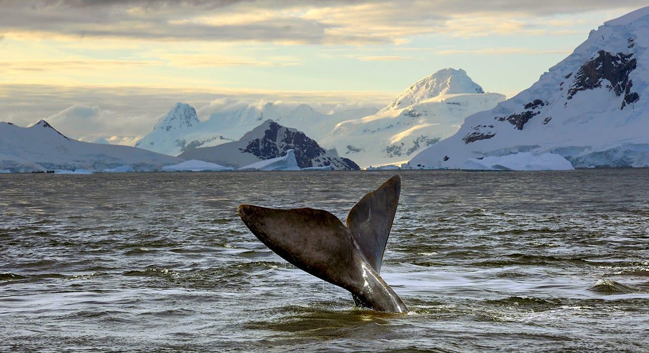 whale antarctica ocean