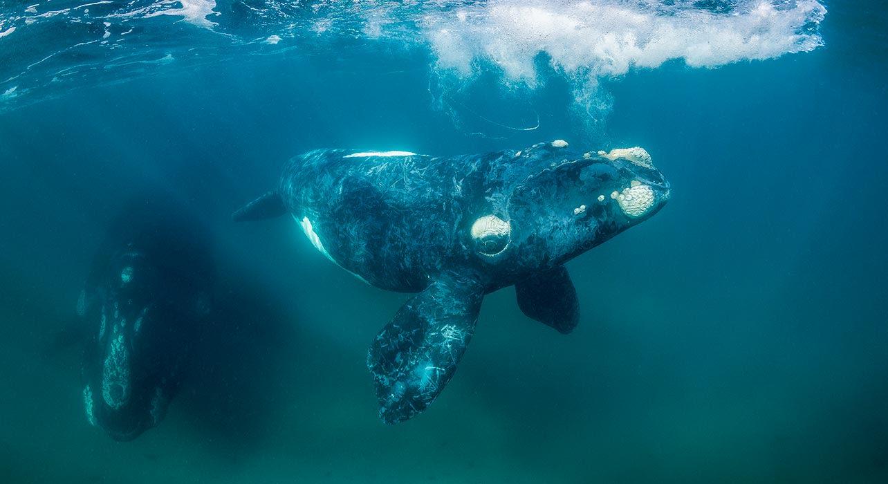 whales antarctica ocean