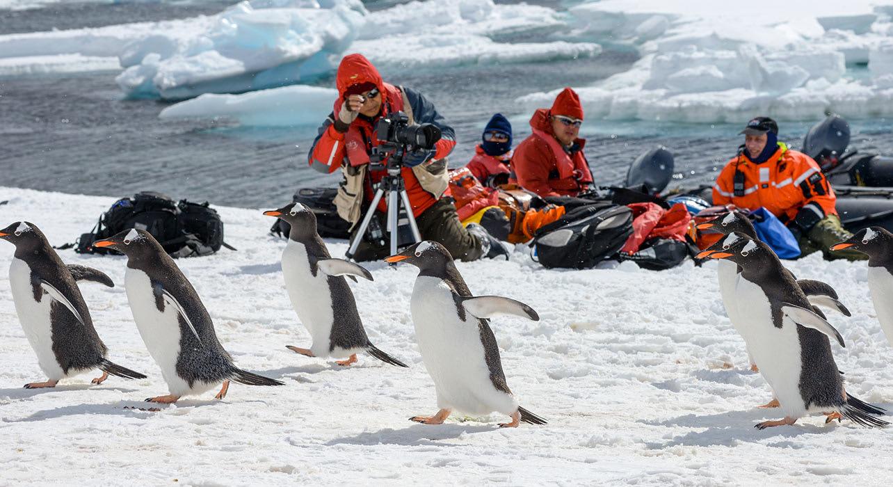 people camera antarctica penguins gentoo