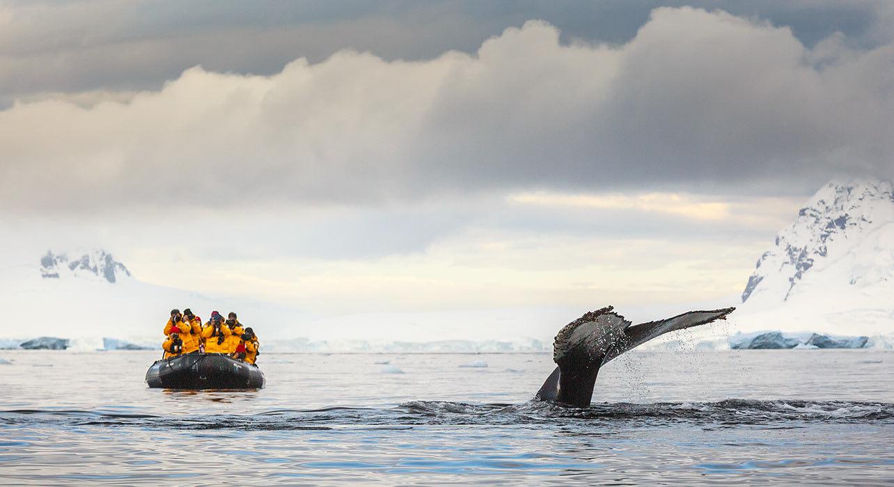 antarctica whale watching zodiac