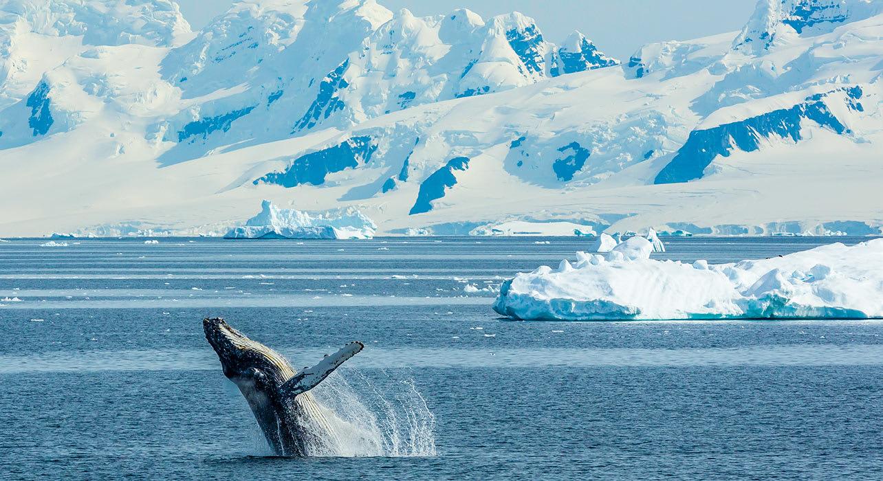 antarctica whale breech ice