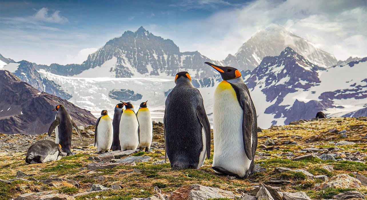 antarctica south georgia island st andrews bay king penguins