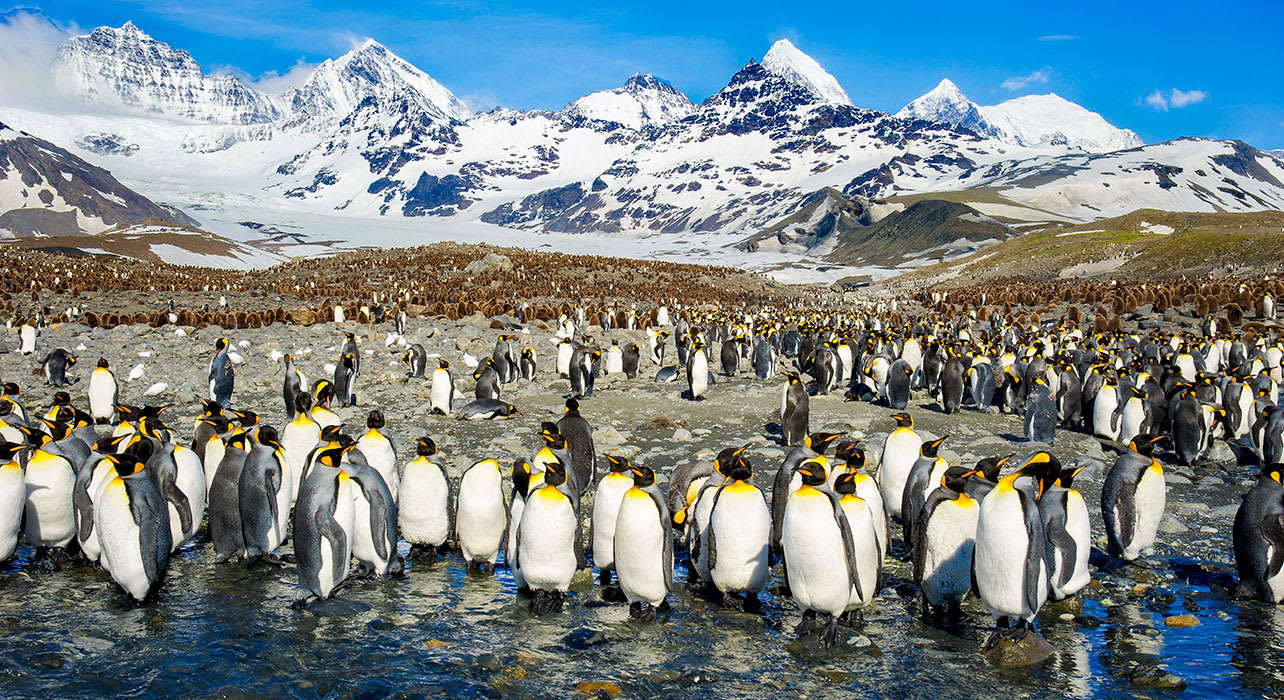antarctica south georgia penguins mountains