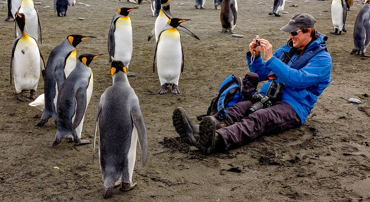 traveler taking photos of penguins antarctica south georgia