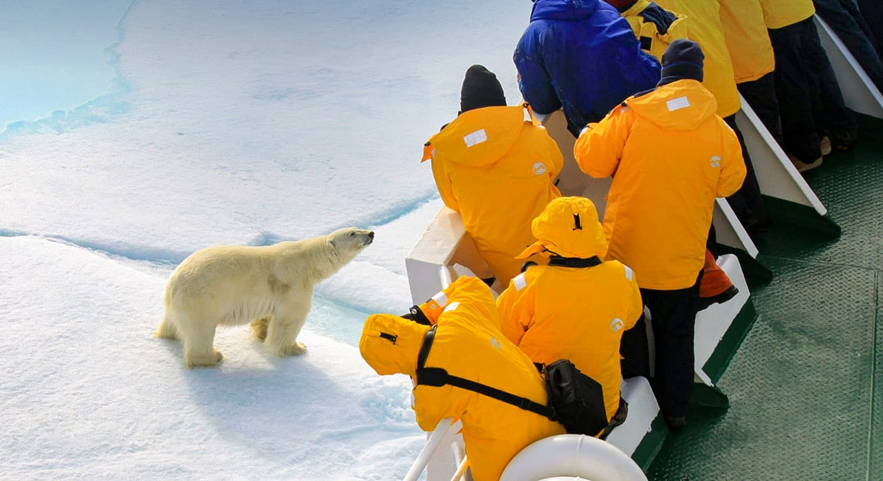 greenland polar bear travelers on ship