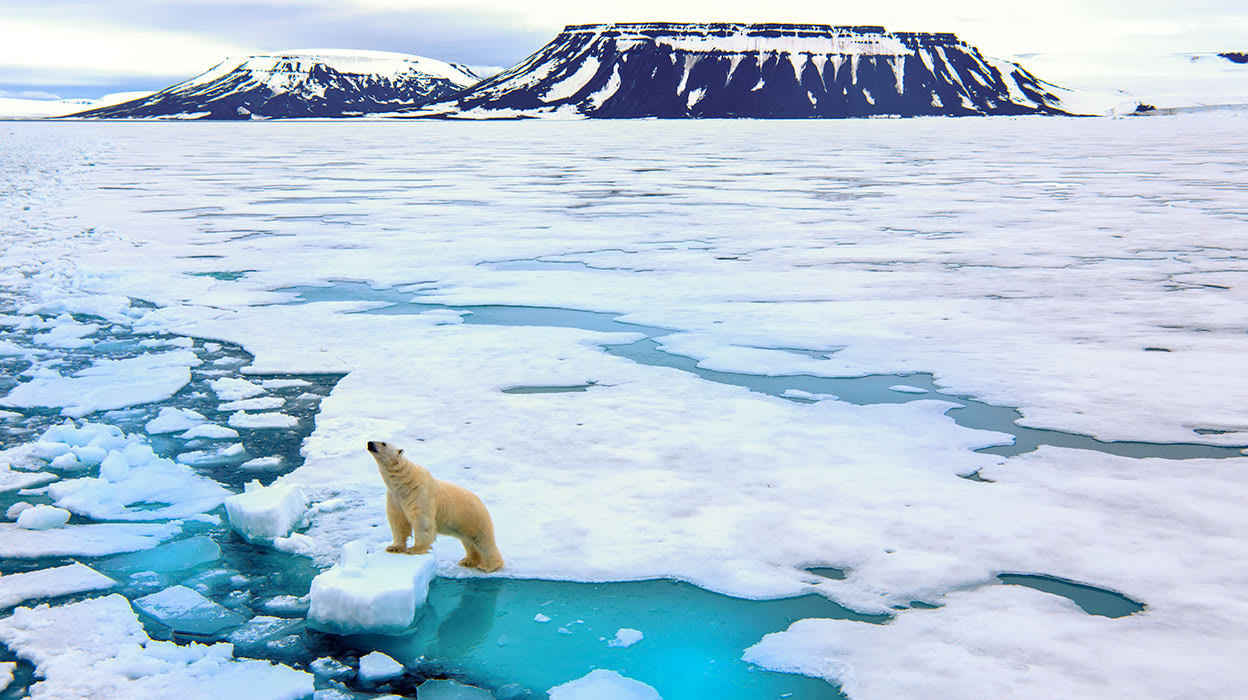 arctic norway svalbard islands spitsbergen polar bear wildlife