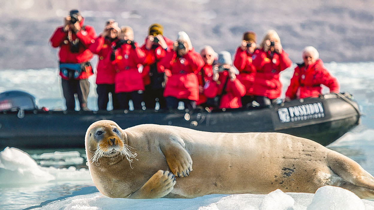 arctic west spitsbergen polar ice tourists zodiac seal
