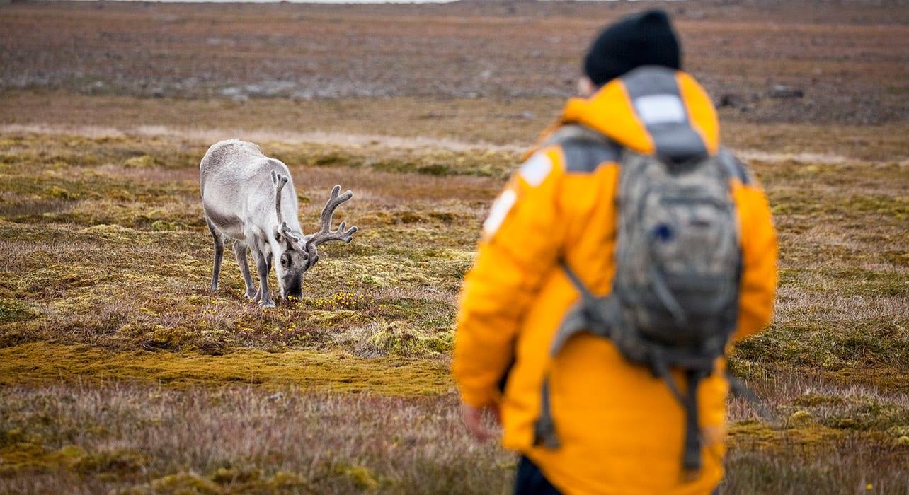 spitsbergen svalbard reindeer sundneset