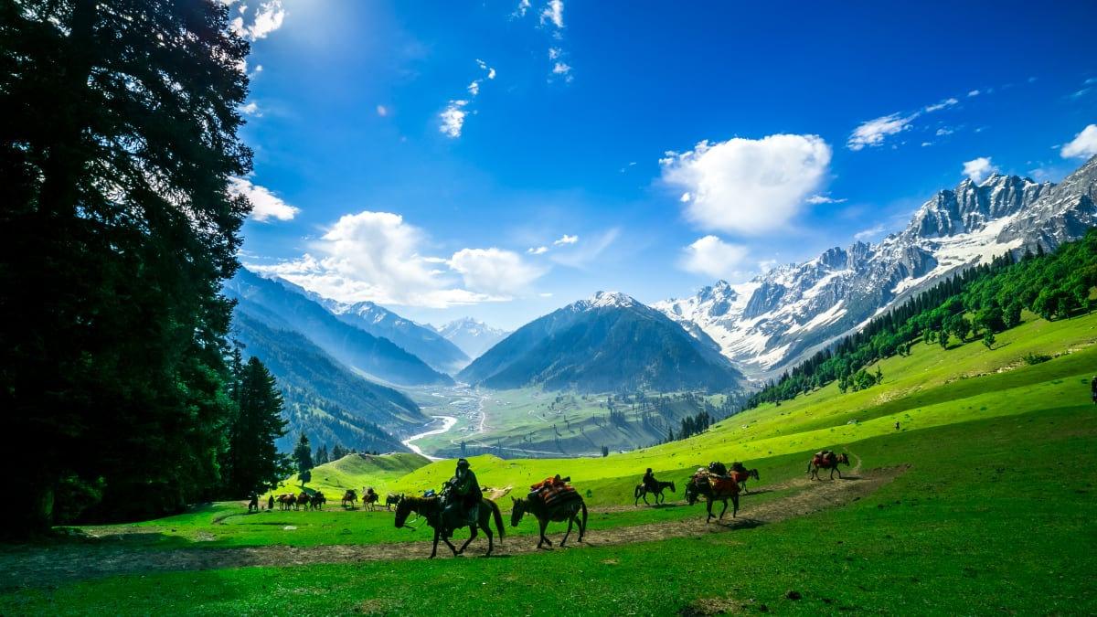 Kashmir Tour Packages & Holidays With Tripfez