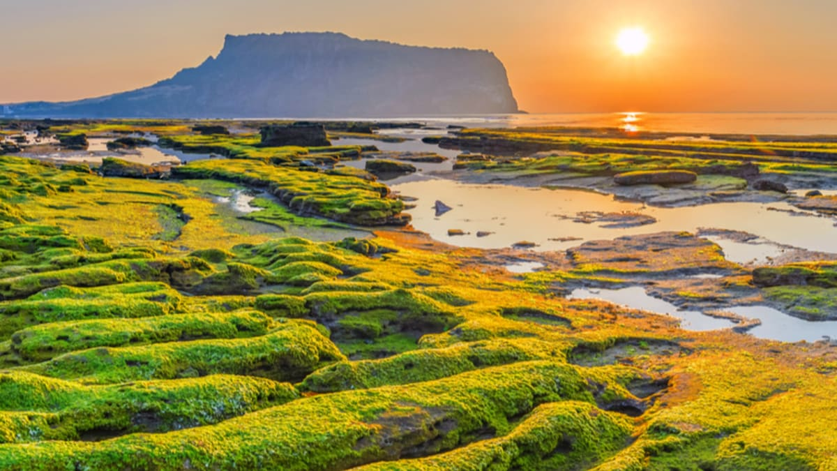 Jeju Tour Packages & Holidays With Tripfez