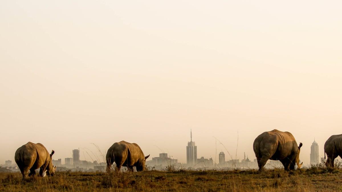 Pakej Percutian ke Nairobi Bersama Tripfez