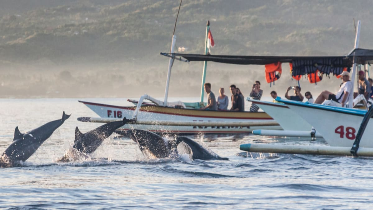 Lawatan Ikan Lumba-lumba Bali 2020 Bersama Tripfez