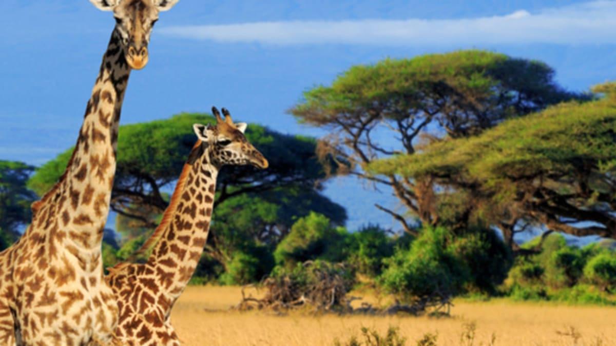Pakej Percutian ke Africa Bersama Tripfez