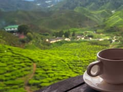 Tripfez Travel Discover The Best of Cameron Highlands package