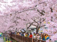 Tripfez TravelKorea (Spring) package