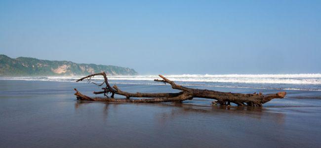 Дерево в волнах пляжа Парангритис