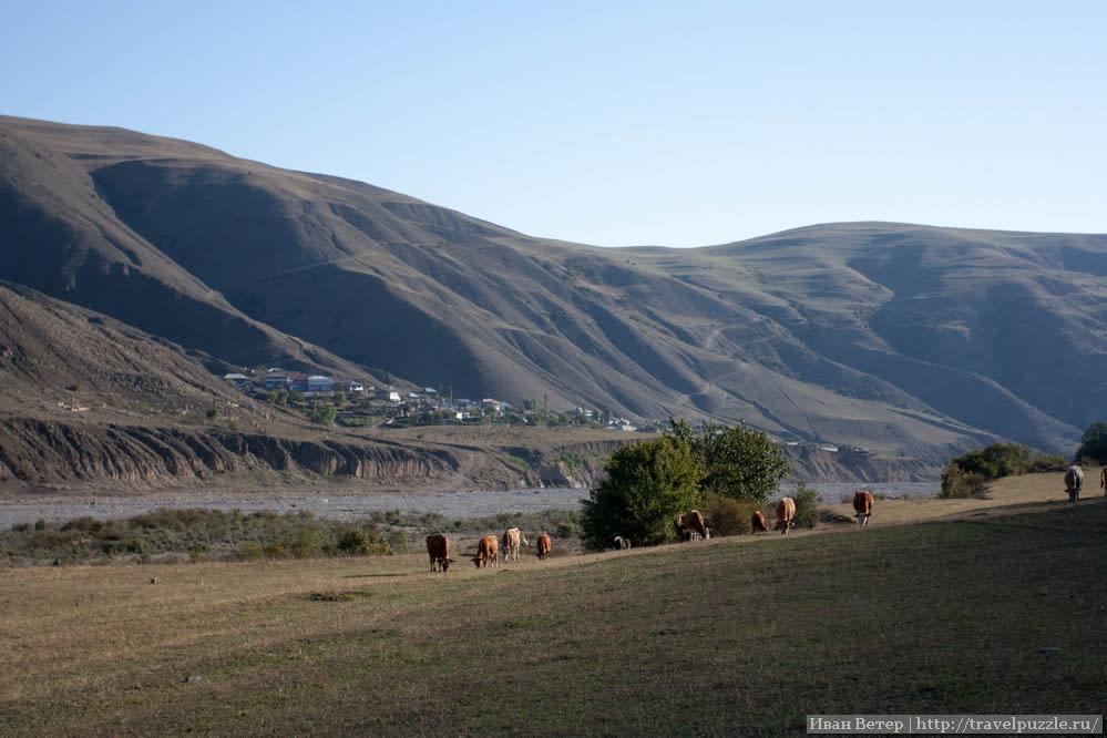 Вид на деревню и стада