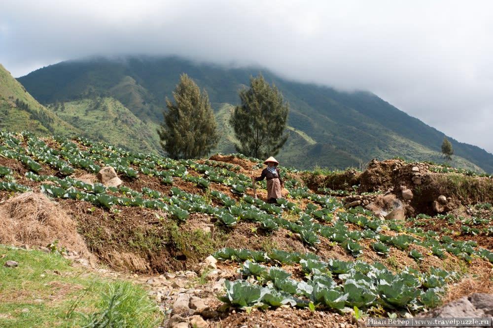 Террасы в горах Индонезии