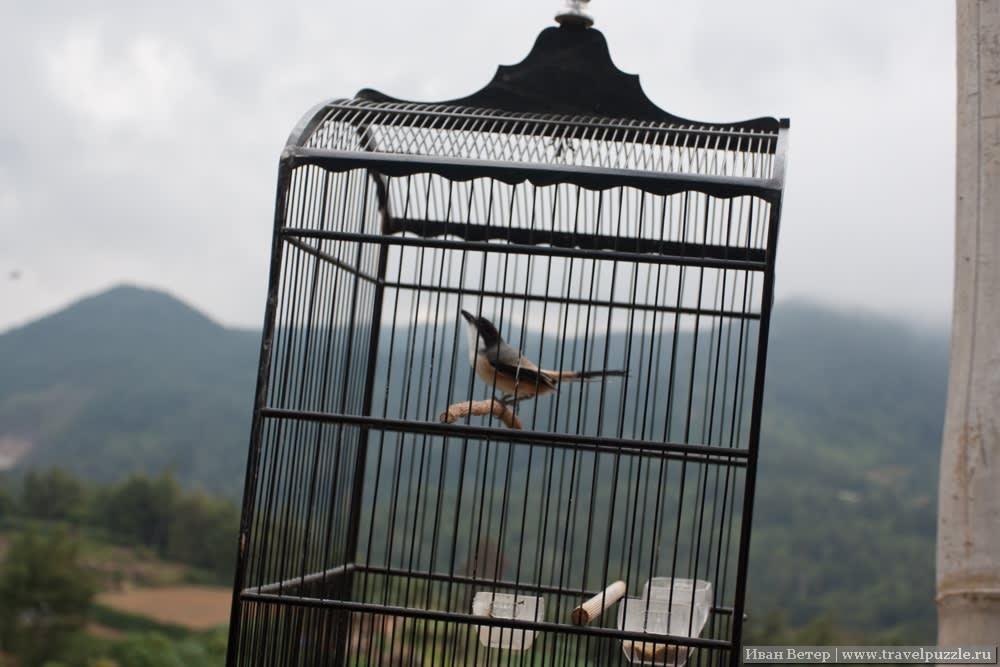 Птица у обрыва