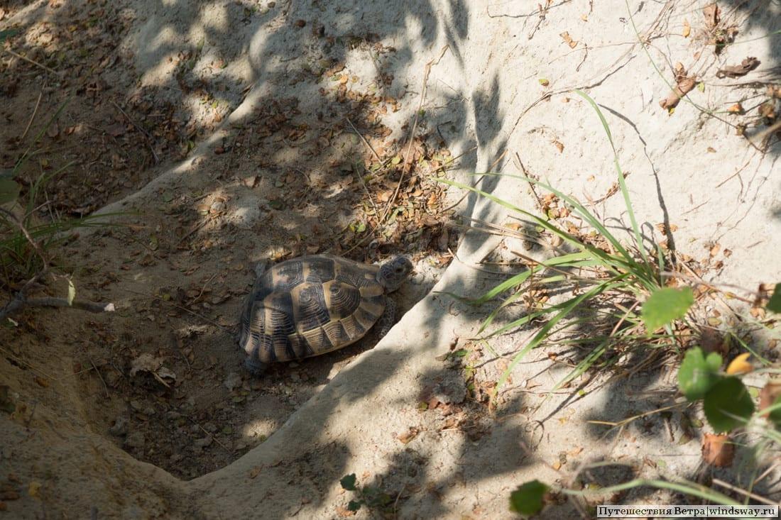 Черепаха в Болгарии
