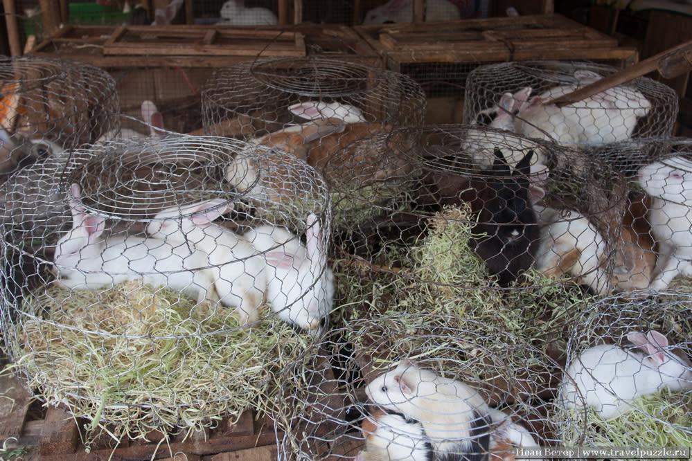 Животные в клетках на рынке