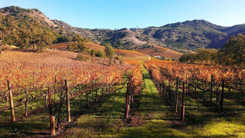 Gallery - October 2014 - Napa Valley California