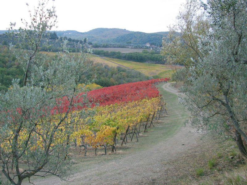 Gallery - November 2012 - Lamole in Chianti Classico Tuscany
