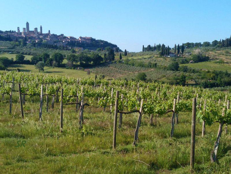 Gallery - June 2017 - San Gimignano Tuscany